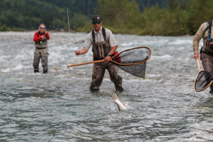 bull trout fight
